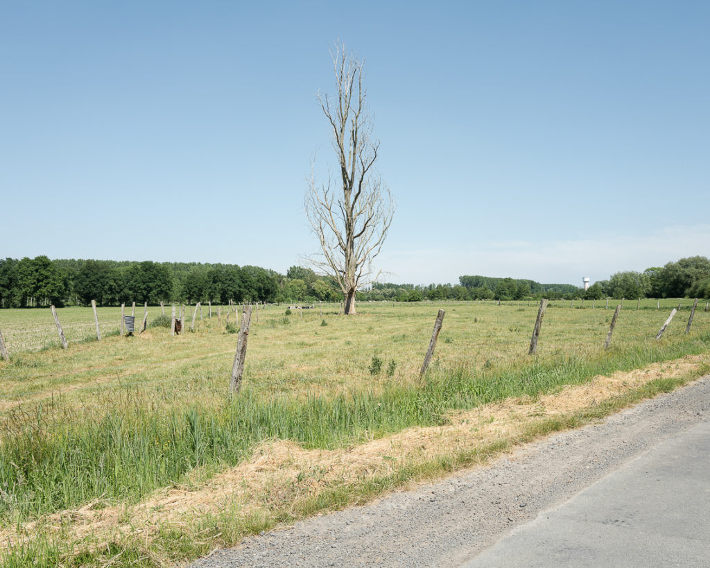 Landscape photo dead tree field